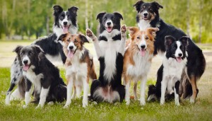 Group of happy dogs